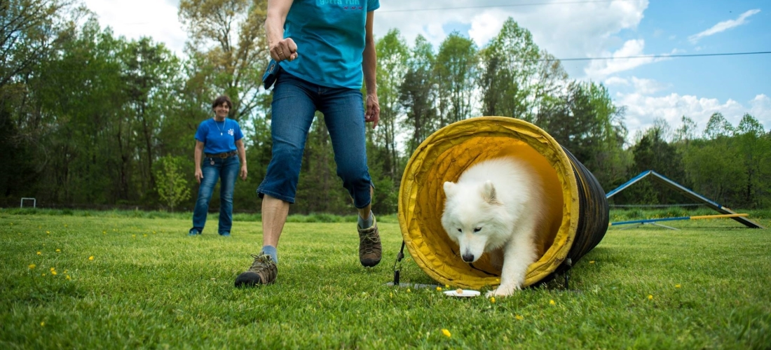 agility-class-topics-dogs-training